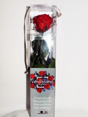 Rosa eterna roja mini